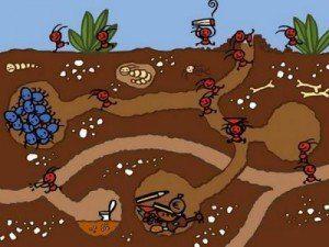 El hormiguero triste - Cuentos de navidad para ninos pequenos ...